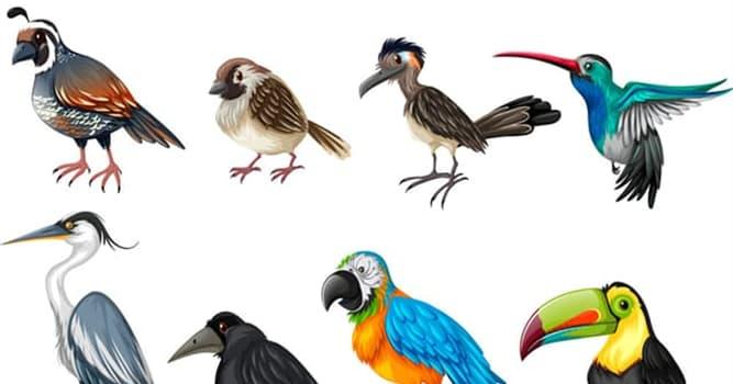 Natur Wissensfrage: Welches ist der einzige Vogel der Welt, welcher zwei Zehen pro Bein hat?