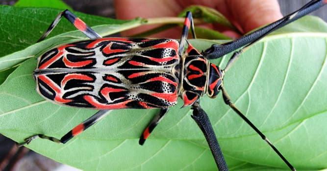 Naturaleza Pregunta Trivia: ¿Cómo se llama el escarabajo de la imagen?
