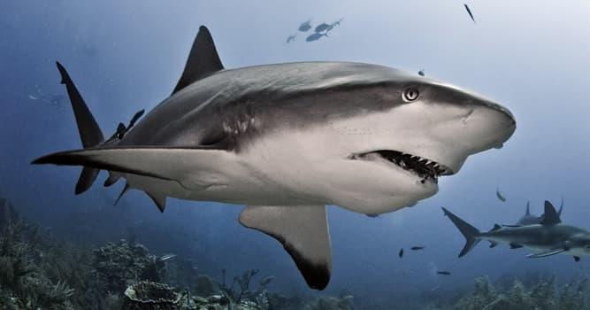 Naturaleza Pregunta Trivia: ¿Cuál de estos órganos no forma parte de la anatomía del tiburón?