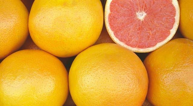 """Naturaleza Pregunta Trivia: ¿Alrededor de qué siglo fue producido de manera espontánea """"El árbol del pomelo"""" (Citrus × paradisi)?"""