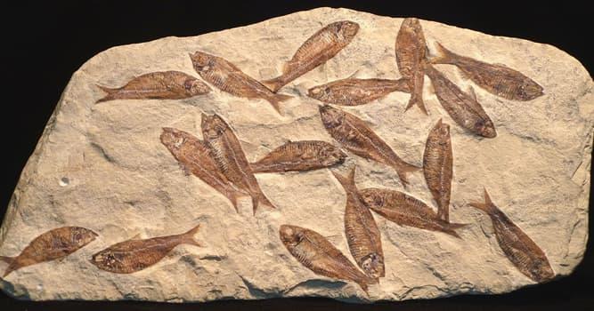 """Wissenschaft Wissensfrage: Was bedeutet der Begriff """"Fossil""""?"""