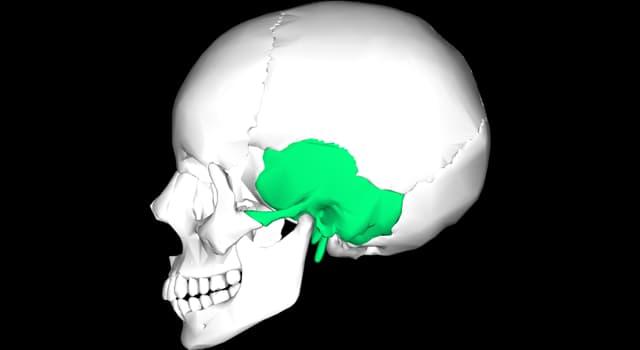 Сiencia Pregunta Trivia: ¿Cómo se llama el hueso que en la imagen se resaltó en color verde?