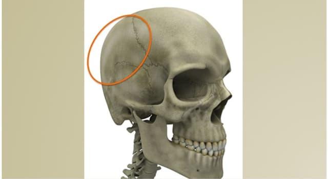 Сiencia Pregunta Trivia: ¿Cómo se llama el hueso señalado en la imagen?
