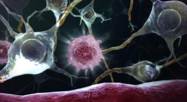 Сiencia Pregunta Trivia: ¿Cómo se llama la parte central de una neurona?