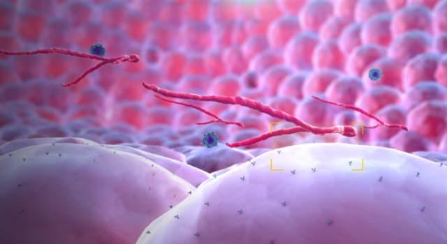 Сiencia Pregunta Trivia: ¿Cuál de estos animales es más resistente al virus del ébola?