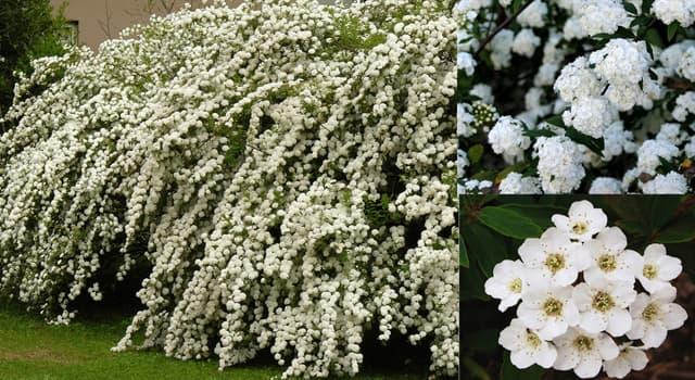 Naturaleza Pregunta Trivia: ¿Cuál es el nombre de la planta que se ve en la imagen?
