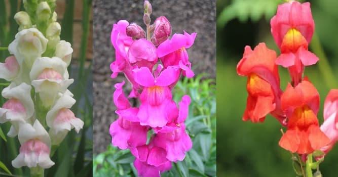 Naturaleza Pregunta Trivia: ¿Cuál es el nombre de las flores de la imagen?