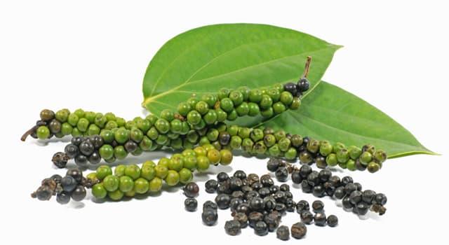 """Naturaleza Pregunta Trivia: ¿Cuántas clases de pimienta se extraen de la especie """"Piper nigrum""""?"""