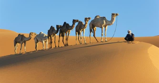 Geografía Pregunta Trivia: ¿Cuántos países abarca el desierto del Sahara?