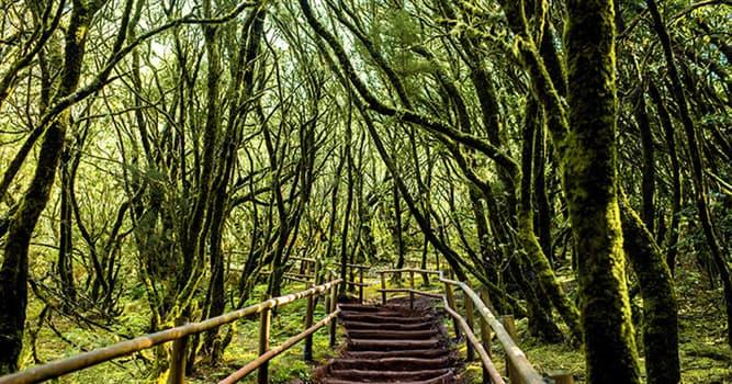 Naturaleza Pregunta Trivia: ¿De qué Parque Nacional español es característico el bosque de laurisilva?