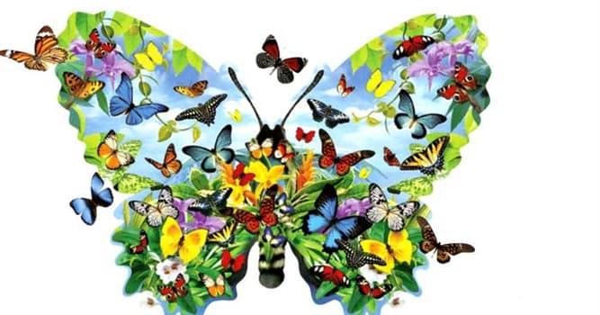 Naturaleza Pregunta Trivia: ¿En cuántas familias se clasifican las mariposas?