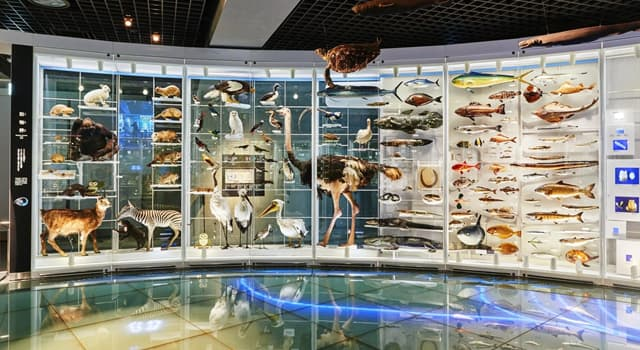 Сiencia Pregunta Trivia: ¿En qué año fue fundado el Museo Nacional de Ciencia de Japón?