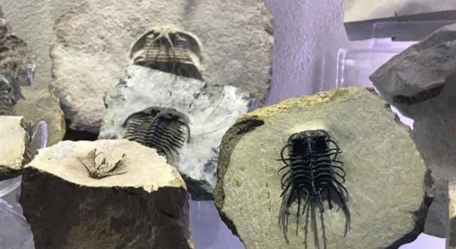 Cultura Pregunta Trivia: ¿En qué país se encuentra el único museo de trilobites del mundo?