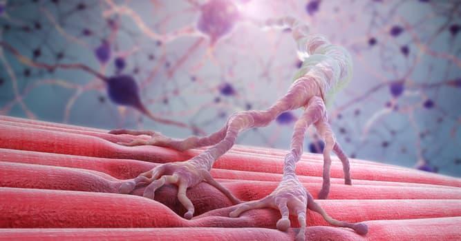 Сiencia Pregunta Trivia: ¿En qué zona del cuerpo se encuentra el nervio trigémino o trigeminal?