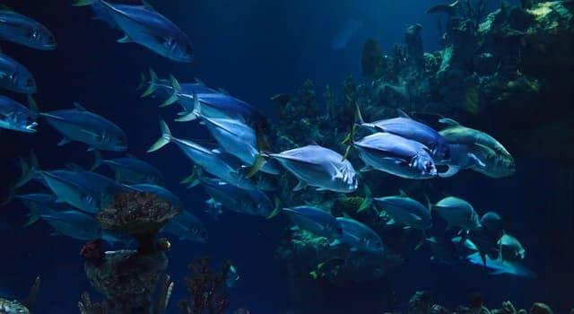 Sociedad Pregunta Trivia: ¿Cómo se llama el cultivo de especies acuáticas vegetales y animales?