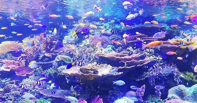 Naturaleza Pregunta Trivia: ¿Qué es una avispa de mar?