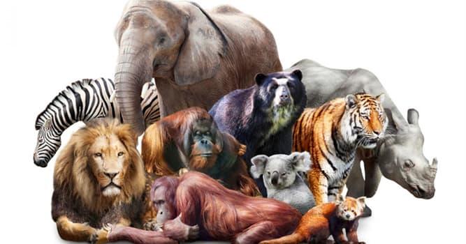 Сiencia Pregunta Trivia: ¿Qué estudia la mastozoología, también conocida como teriología?