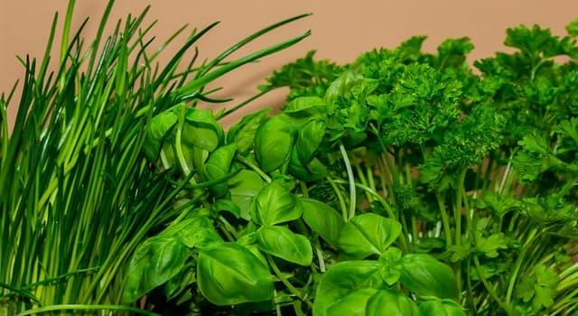 Naturaleza Pregunta Trivia: ¿Qué hierba aromática muy utilizada en la cocina tiene como nombre científico Ocimum basilicum?