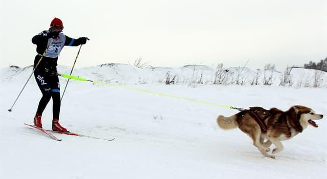Deporte Pregunta Trivia: ¿Dónde surgió el ski joring?