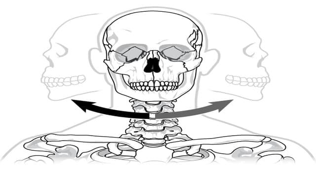 Сiencia Pregunta Trivia: ¿Cómo se llaman las articulaciones que permiten el movimiento en rotación de los huesos alrededor de un eje?