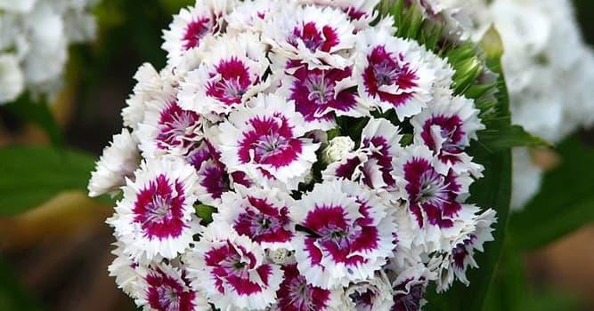 Naturaleza Pregunta Trivia: ¿Cómo es el nombre de la flor de la imagen?