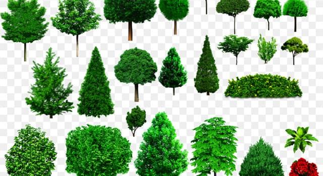 Naturaleza Pregunta Trivia: ¿Cuál es el árbol nacional de Colombia?