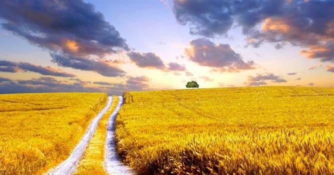 Geografía Pregunta Trivia: ¿Cuándo es el tiempo de la cosecha cerealera en Argentina?