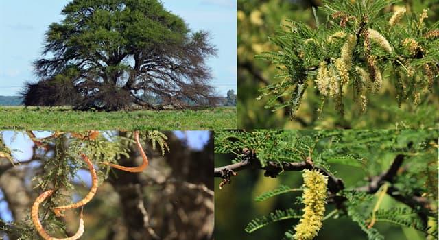 """Naturaleza Pregunta Trivia: ¿De qué país es endémico el árbol llamado """"Caldén"""" (Prosopis caldenia)?"""