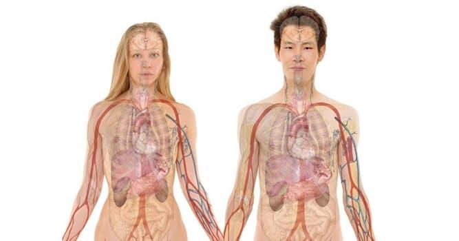 Сiencia Pregunta Trivia: ¿Dónde suele ubicarse el seno preauricular o SPA?