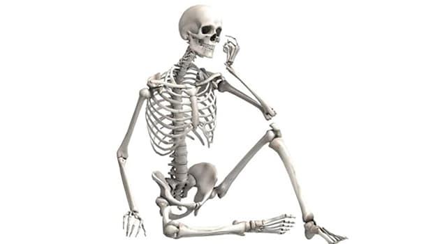 Сiencia Pregunta Trivia: ¿En cuántos tipos se clasifican los huesos del cuerpo humano?