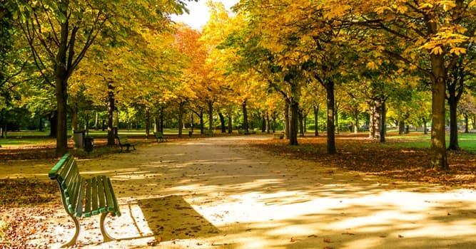 Geografía Pregunta Trivia: ¿En qué ciudad europea se localiza el parque llamado Tiergarten?