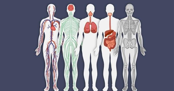"""Сiencia Pregunta Trivia: ¿En qué órgano del cuerpo humano se produce la enfermedad llamada """"Asbestosis""""?"""