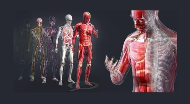 Сiencia Pregunta Trivia: ¿En qué parte del cuerpo humano se forman los tonsilolitos?