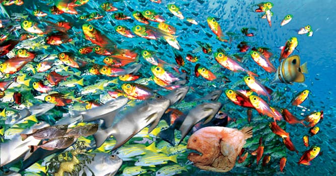 natura Pytanie-Ciekawostka: Która dieta ptaków składa się prawie wyłącznie z ryb?