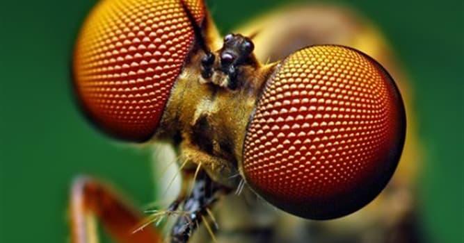 natura Pytanie-Ciekawostka: Który owad ginie po kryciu?