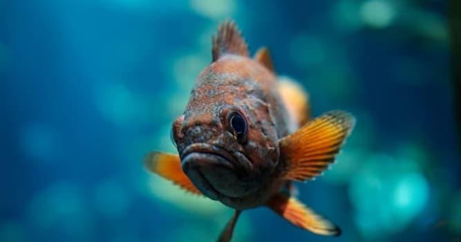 Natur Wissensfrage: Was ist weltweit die kleinste bekannte Fisch-Art?