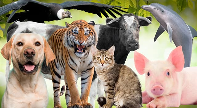 Naturaleza Pregunta Trivia: ¿Qué es un serval?
