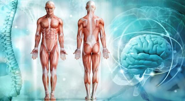 Сiencia Pregunta Trivia: ¿Qué órgano del cuerpo humano produce laberintitis cuando se inflama?