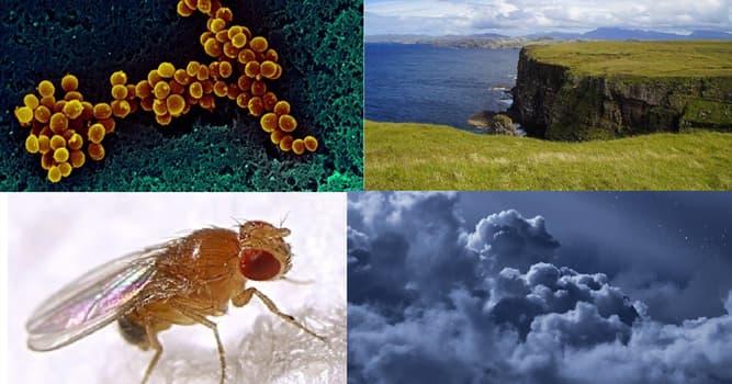 Naturaleza Pregunta Trivia: ¿Qué son las arqueas?