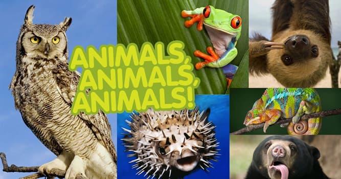 Natur Wissensfrage: Welches der Tiere ist wechselwarm?