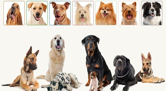 Naturaleza Pregunta Trivia: ¿Cuál de estas razas de perro tiene el sentido del olfato más desarrollado?