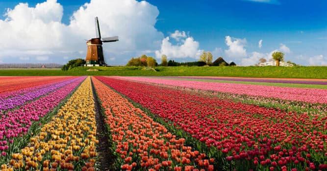Geographie Wissensfrage: Wie heißt die Hauptstadt der Niederlande?