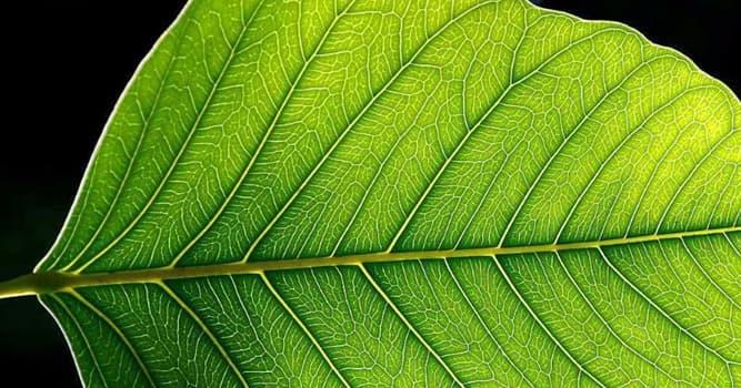 Natur Wissensfrage: Wie heißt ein Prozess zur Erzeugung von energiereichen Stoffen aus energieärmeren Stoffen?