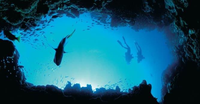 Geografía Pregunta Trivia: ¿Cuál es el Océano más grande del mundo?