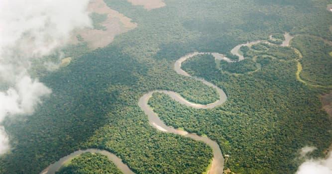 Naturaleza Pregunta Trivia: ¿Cuáles de estas dos especies están separadas por el río Congo?