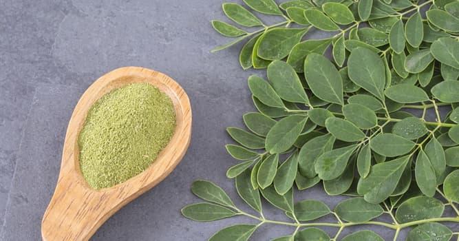 Naturaleza Pregunta Trivia: ¿De dónde es originaria la Moringa oleifera?