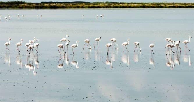Geografía Pregunta Trivia: ¿Dónde está ubicado el Parque Nacional Doñana?