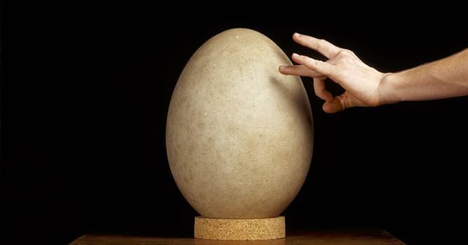 Сiencia Pregunta Trivia: ¿Qué organismo vivo produce el huevo más grande del mundo?