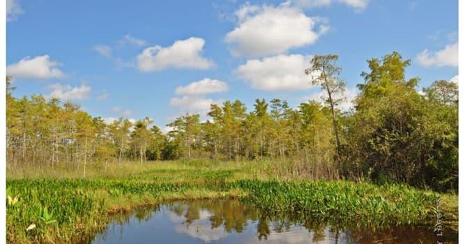 Geografía Pregunta Trivia: ¿En qué país se encuentra el Parque Nacional de los Everglades?