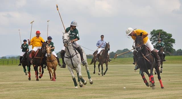 Спорт Вопрос: Что НЕ входит в экипировку игроков в конном поло?